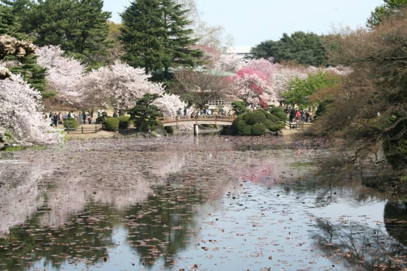 Shinjuku-Gyoen-National-Garden