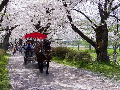 Tenshochi-Park-Kitakami