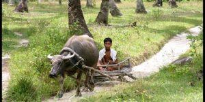 สัตว์ประจำชาติของประเทศฟิลิปปินส์